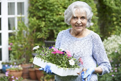 Portrait Of Senior Woman Planting Flowers In Garden Stock Image