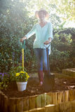 Portrait of senior woman standing with garden fork and shovel on dirt Royalty Free Stock Photos