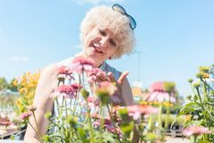 Portrait of a serene senior woman standing in the garden in a su. Portrait of a serene senior woman with an active lifestyle looking at pink flowers while Royalty Free Stock Images