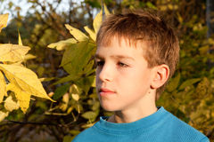 Portrait of serious boy in park, autumn Stock Photo