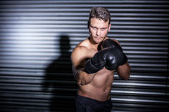 Portrait of serious muscular boxer Royalty Free Stock Images