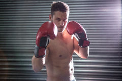 Portrait of serious muscular boxer Royalty Free Stock Photo