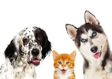 Portrait set of pets. On white background Royalty Free Stock Photo
