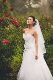 Portrait of sexy bride at rose garden Royalty Free Stock Photography