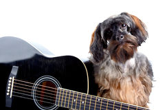 Portrait of a shaggy dog with a guitar Royalty Free Stock Photos