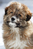 Portrait of a  shaggy puppy. Stock Image