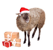 Portrait Of sheep in christmas hat On White Royalty Free Stock Photos