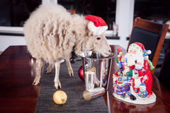 Portrait Of sheep in christmas hat On White Stock Photography