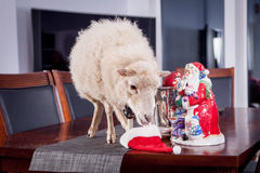 Portrait Of sheep in christmas hat On White Stock Photo
