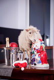 Portrait Of sheep in christmas hat On White Stock Images