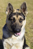 Portrait of a Shepherd Stock Image