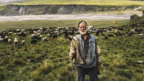 Portrait of shepherd with sheep on a field in the mountains. The royalty free stock image