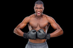 Portrait of shirtless muscular boxer flexing muscles. Portrait of a shirtless muscular boxer flexing muscles over black background Royalty Free Stock Image
