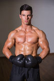Portrait of a shirtless muscular boxer Royalty Free Stock Photography