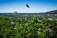 An American Crow in Branson at Southwest Missouri royalty free stock image