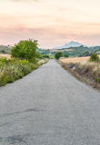 Portrait shot of a lonely country road. Lonely asphalt country road diminishing to the vanishing point in the horizon. The warm sunset colors and low contrast, a Royalty Free Stock Photos