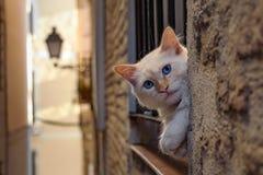 Mr. Kitten. Portrait shot of white kitten at medieval city of Toledo, Spain stock images