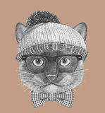Portrait of Siamese Cat with glasses, hat and bow tie. Stock Photos
