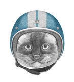 Portrait of Siamese Cat with Helmet. Royalty Free Stock Images