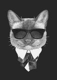 Portrait of Siamese Cat in suit. Royalty Free Stock Photography