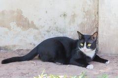 Portrait sinistre rampant de visage de chat noir photographie stock libre de droits