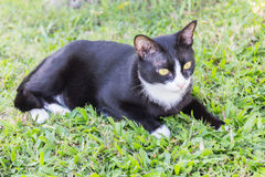 Portrait sinistre rampant de visage de chat noir photos libres de droits