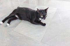 Portrait sinistre rampant de visage de chat noir images stock