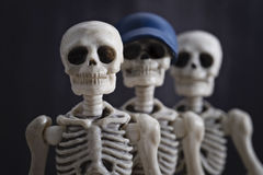 Portrait of skeletons Royalty Free Stock Photos