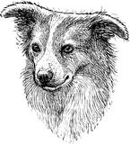 Portrait sketch of a lap dog. Vector drawing of the head of a cute dog royalty free illustration