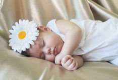 Portrait of sleeping baby girl. Cute baby girl with white daisy flower on the head. Little girl  calmly sleeping Stock Photos