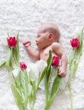 Portrait of  sleeping newborn baby Stock Images