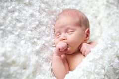 Portrait of  sleeping newborn baby Royalty Free Stock Image