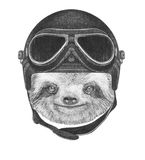 Portrait of Sloth with Vintage Helmet. Royalty Free Stock Photo