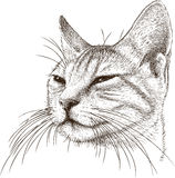 Portrait of a sly cat. Vector drawing of the house cat Stock Photos