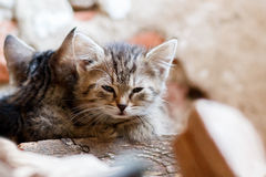 Portrait of small baby cat Royalty Free Stock Images