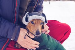 Portrait of small dog, wearing in a funny winter hat Stock Photos
