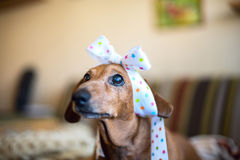 Portrait of small funny dog Stock Photo