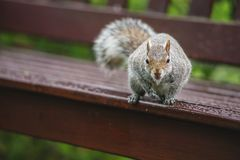 Portrait of small squirrel in park. Animal photography in nature Stock Image