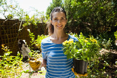 Portrait of smiling beautiful woman holding trowel and potted plant on sunny day. Portrait of smiling beautiful woman holding trowel and potted plant at backyard stock photo