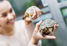 Portrait of  smiling cheerful woman holding turtles Royalty Free Stock Photos