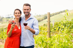 Portrait of smiling couple holding wineglasses. At vineyard on sunny day stock image