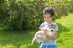Portrait of a smiling cute little boy with a husky puppy in a garden Stock Image