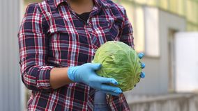 Portrait of smiling female gardener holding harvested cabbage outside greenhouse. Close-up of woman in blue gloves holding cabbage in the garden. Harvest stock video