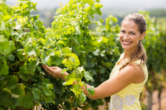 Portrait of smiling female vintner inspecting grape crop Stock Image
