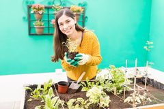 Young Woman Working In Vegetable Garden. Portrait of smiling gorgeous woman planting fresh vegetable in garden royalty free stock photos