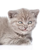 Portrait of a smiling kitten. isolated on white background Stock Photos