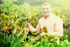 Portrait of smiling man near grapes in vineyard Royalty Free Stock Photos
