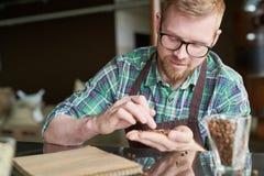 Coffee Roaster Examining Beans royalty free stock photo