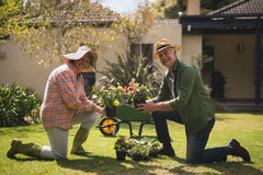 Portrait of smiling senior couple holding plants while kneeling in yard Stock Photos