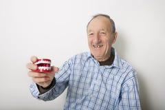 Portrait of smiling senior man holding teeth model against gray background Royalty Free Stock Photo